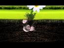 Dj жёстик - чумачечая весна