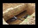 Змея в могиле, реальная история.Напоминание о смерти.