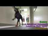 Парализованный доберман Кенни учится ходить