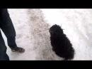 Собака Пули в зимнем парке