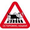 Котофикация дворов Петербурга
