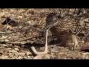 Смертельная схватка птица против змеи_0_1437721686846