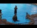 Дельфинарий .Египет 2014 год. Маруся