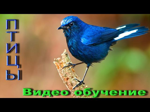 Птицы, Развивающий мультик, Фото птиц, Названия птиц, Пение птиц, Обучающее видео...