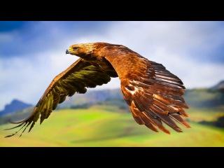 о хищных птицах в 4К