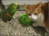 Кот и попугай - драка за еду / Cat and parrot - fight for food