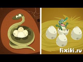 Фиксики - История вещей - Яйцо