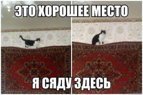 http://cs622517.vk.me/v622517317/22957/UUukahdn8LY.jpg