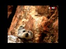 Rare Ili pika captured by cameras for first time in two decades in northwest China