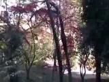 Батуми - ботанический сад (ноябрь 2013)
