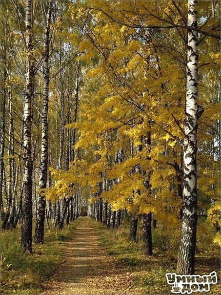 Осень в Умном доме!