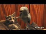 говорящий попугай прессует кота!