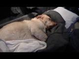 Спасение собаки из ледяной воды. Помощь при гипотермии.
