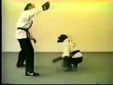 обезьяна карате-Смешные видео приколы