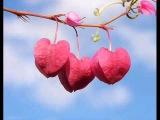 პატარა ქსოვრელები - გული გეძახის / Patara Qsovrelebi - Guli Gedzaxis
