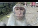 Смешное видео про животных. Подборка 2014 cvtiyjt dbltj ghj ;bdjnys[. gjl,jhrf 2014