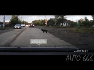 Для быдло ПЕШЕХОДОВ! [Учитесь] Собаки переходят дорогу.