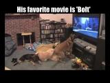 Собака, которая любит смотреть