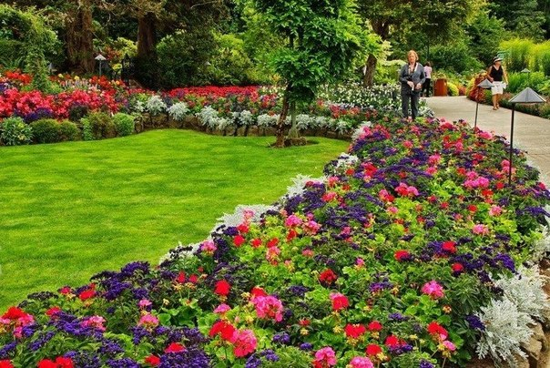 Садовые неприхотливые многолетние растения и