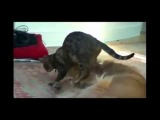 Самые смешные ролики про кошек Топ