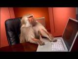 Когда пропал интернет во время просмотра реальной качалочки