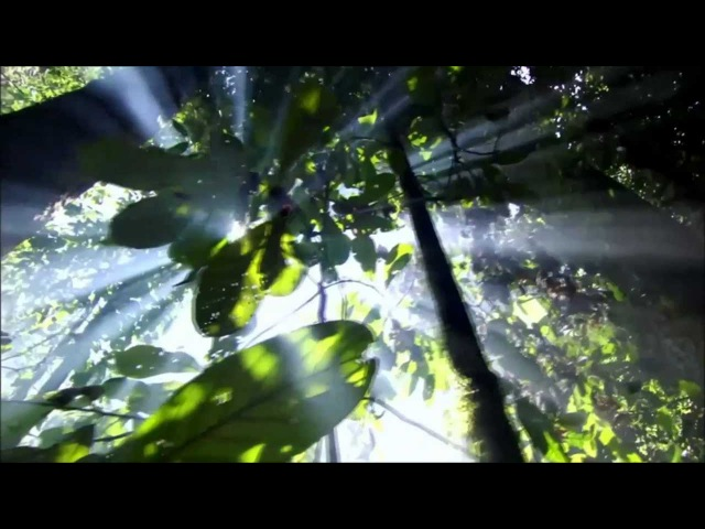 Return To Innocence Enigma Beautiful Mother Nature HD