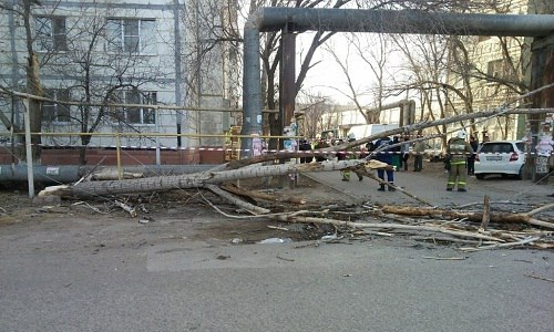 Упавшее в Армянске дерево травмировало девушку