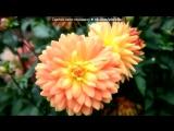 «осень» под музыку Ференц Лист - Грезы любви. Ноктюрн № 3. Picrolla