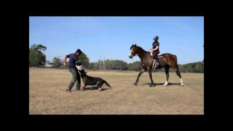 Horse and Dog Protection