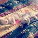 Азат Хафизов фото #41