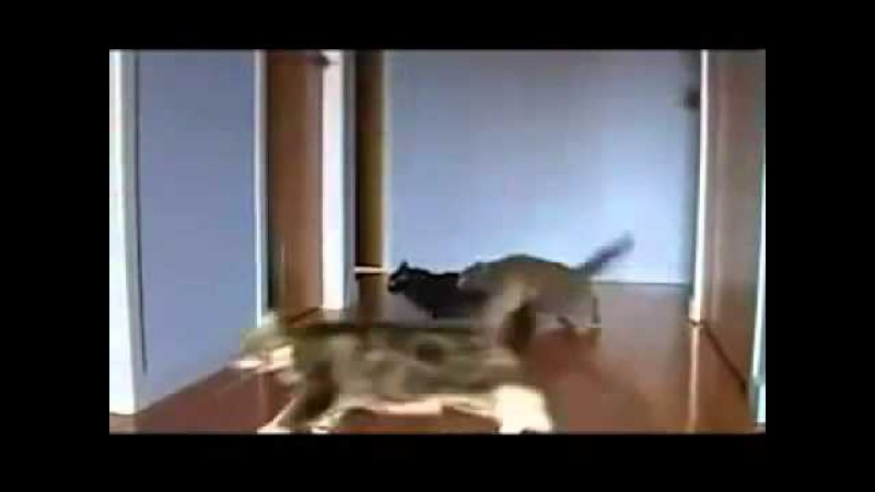 коты дрифтеры.flv