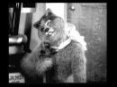 Психоделика 1914 год Микки Маус бьется в конвульсиях оригинал 480