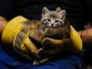 Мир не без добрых людей Спасение животных Круговорот добра в природе