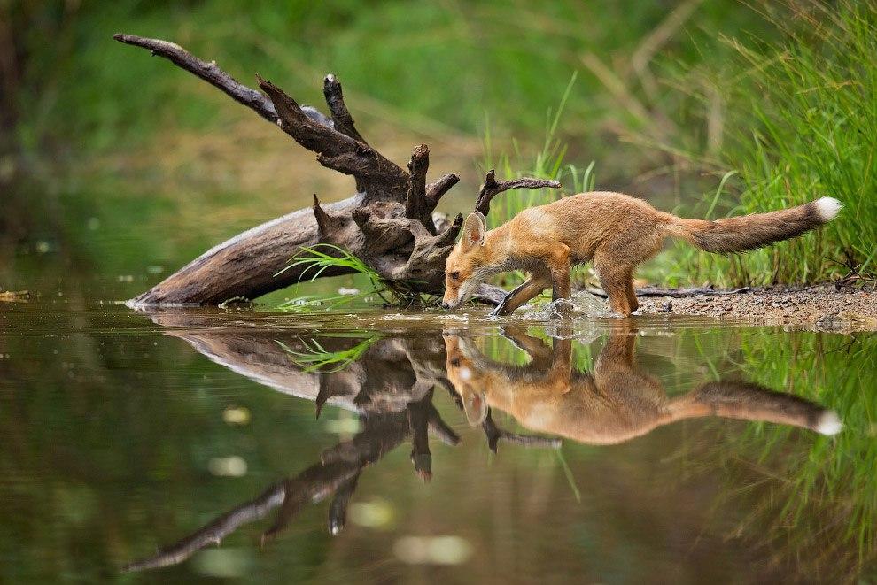 eP2TEhZEGw - Лучшее с конкурса фотографии National Geographic 2015 (23 фото)