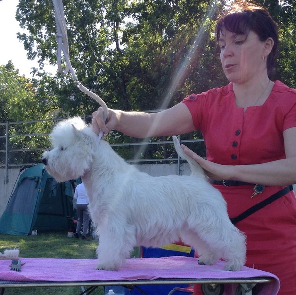 Best Baby (22 August 2015, Saturday) - Winners of the International Dog Show «The Sir Great Novgorod 2015», 22 - 23 August 2015