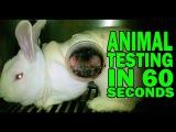Вивисекция (тесты на животных) за 60 секунд