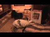 Карликовый кролик хулиган