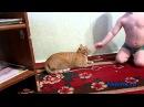 Самые прикольные кошки, домашние любимцы, смешное видео про кошек