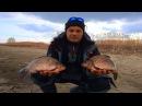 Рыбалка от Михалыча! Ловля огромных карасей на силиконовые приманки!