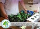 Выращивание рассады томатов за 30 дней дома!