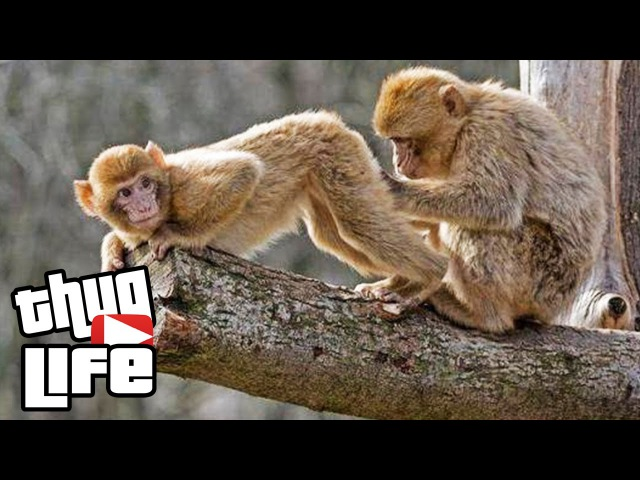 Ultimate Thug Life Compilation of July 2015 Episode 3