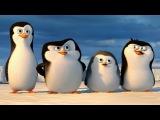 DreamWorks: PINGWINY Z MADAGASKARU - film dokumentalny: Pingwiny z Antarktydy - POLSKA