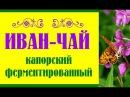 Иван-чай капорский, ферментированный