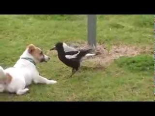 Забавный щенок играет с забавной птицей