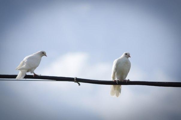 белые голуби Новосибирского крематория на фоне неба