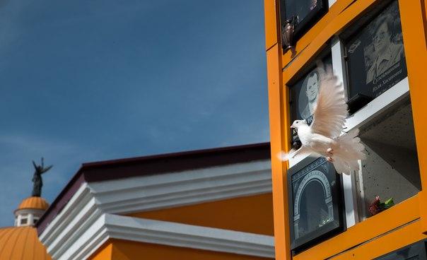 Колумбарий обиталище голубей летящий голубь