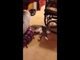 Кот притворяется мертвым, чтобы не идти гулять