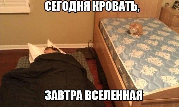 Кошачий юмор - Страница 13 MD21Zj8A238