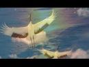 ЕЛЕНА ВАЕНГА - Белая птица -ПЕСНЯ ДЛЯ ДУШИ.....