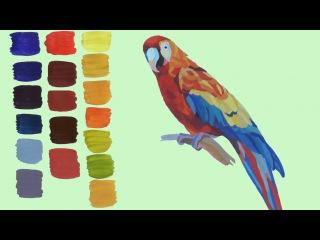 Уроки рисования. Как нарисовать попугая гуашевыми красками. Смешивание гуашевых красок